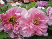 花博--春之花頌:IMG_7292_調整大小.JPG