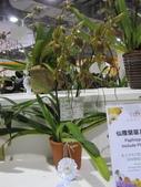 2011台北國際蘭展:IMG_6343_調整大小.JPG