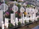 2011台北國際蘭展:IMG_6116_調整大小.JPG