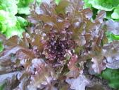 99-----菜花園:IMG_3667_調整大小