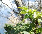 太平山翠峰湖:調整大小DSC_0369.JPG