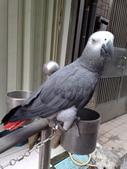 鳥:調整大小20081023126.jpg