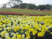 花博--春之花頌:IMG_4715.JPG
