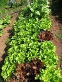 99-----菜花園:IMG_3147_調整大小
