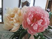 花見:IMG_9857