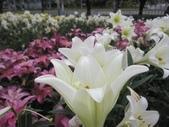 花博--春之花頌:IMG_5840.JPG