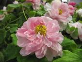 花博--春之花頌:IMG_7275_調整大小.JPG