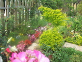 菜花園:調整大小103_1628.JPG