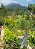 菜花園:調整大小103_1601.JPG