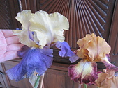 花見:IMG_9853