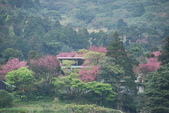 竹子湖:DSC_0113_調整大小_調整大小.JPG