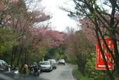 竹子湖:DSC_0086_調整大小_調整大小.JPG