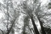 雪見森林遊憩區:DSC_0351.JPG