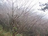 太平山翠峰湖山毛櫸步道:調整大小100_0798.JPG