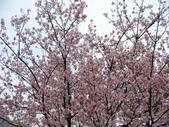 99---櫻花林:調整大小DSC_0946