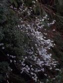 太平山翠峰湖山毛櫸步道:調整大小100_0898.JPG