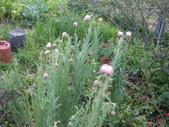 2011菜花園:IMG_5643_調整大小.JPG