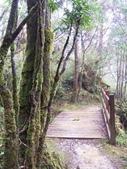 太平山翠峰湖山毛櫸步道:調整大小100_0768.JPG