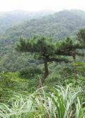 九份-金瓜石-貂山古道:調整大小照片 109.jpg