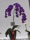 2011台北國際蘭展:IMG_6224_調整大小.JPG