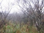 太平山翠峰湖山毛櫸步道:調整大小100_0788.JPG
