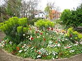 花園:IMG_8129