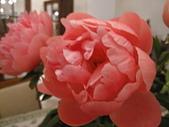 花見:IMG_9847