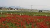 99新社花海:IMG_8681.JPG