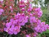 2011菜花園:IMG_8688.JPG