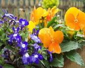 菜花園:調整大小102_9629.JPG