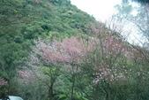 竹子湖:DSC_0092_調整大小_調整大小.JPG
