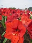 花博--春之花頌:IMG_5844.JPG