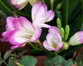 菜花園:調整大小102_9905.JPG