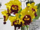 2011台北國際蘭展:IMG_6283_調整大小.JPG