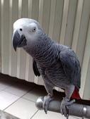 鳥:調整大小20081023124.jpg