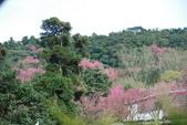 竹子湖:DSC_0101_調整大小_調整大小.JPG