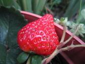 99-----菜花園:IMG_4608_調整大小