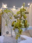 2011台北國際蘭展:IMG_6178_調整大小.JPG