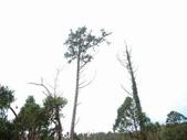 太平山翠峰湖:調整大小DSC_0412.JPG