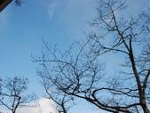 太平山&見晴古道:調整大小DSC_0781.JPG