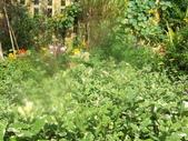 菜花園:調整大小103_1612.JPG