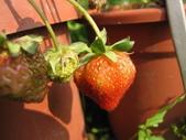 99-----菜花園:IMG_4566_調整大小