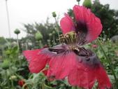 花博--春之花頌:IMG_6792_調整大小.JPG