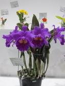 2011台北國際蘭展:IMG_6263_調整大小.JPG