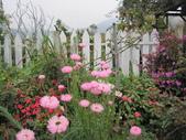 2011菜花園:IMG_7562_調整大小.JPG