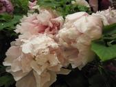 花博--春之花頌:IMG_7253_調整大小.JPG