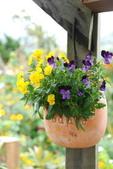 2011菜花園:DSC_0054_調整大小.JPG