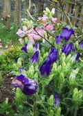 菜花園:調整大小102_9622.JPG