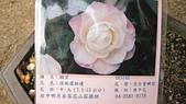 99新社花海:IMG_8780.JPG