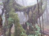 太平山翠峰湖:調整大小101_8706.JPG